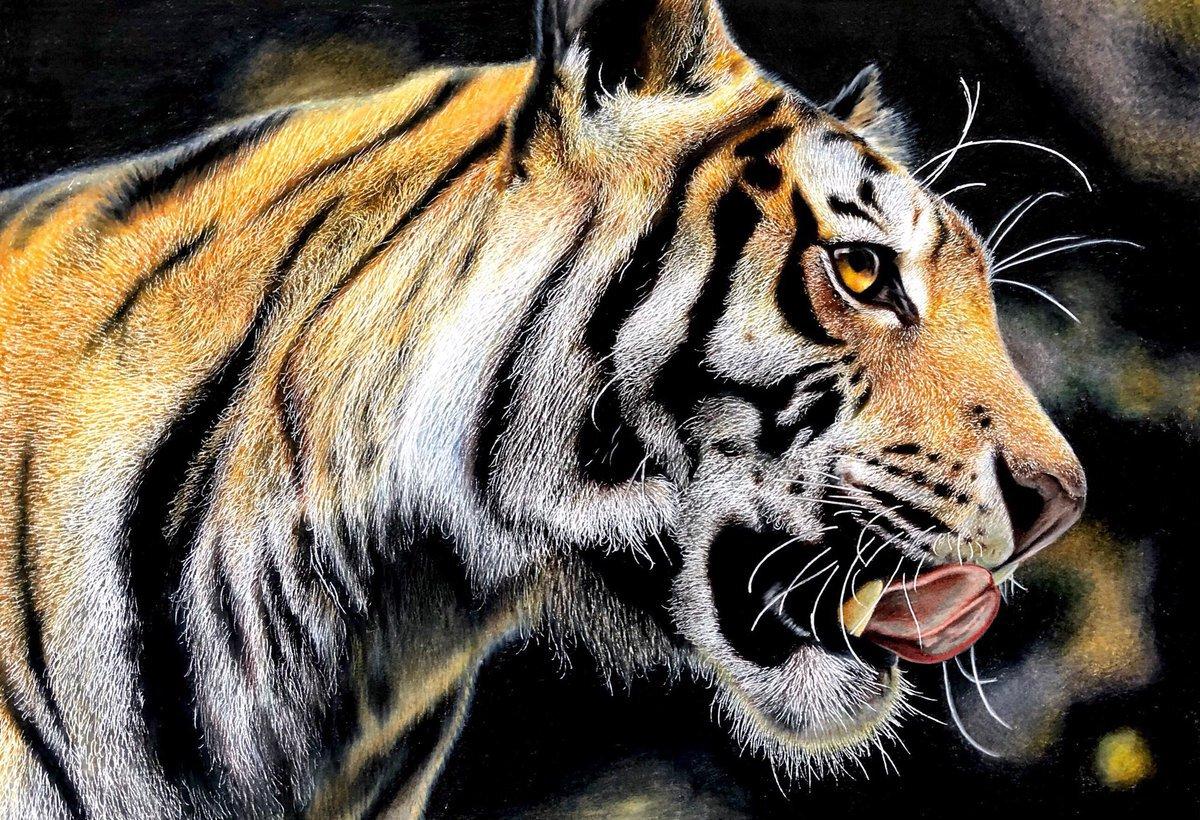 虎の画像 p1_29