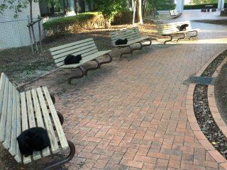 仲が悪い…? 黒ねこたちが等間隔に座る珍しい光景を発見!