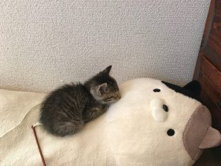 子猫が大きな添い寝まくらの上で休む様子があのジブリ作品の1シーンみたい!