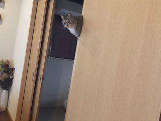 まるでゲームのバグ!?引き戸の隙間で浮いている猫の写真があまりにも不思議