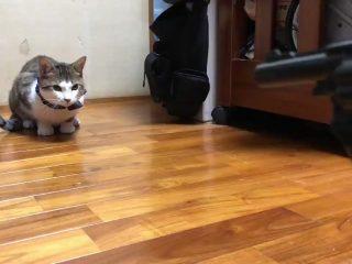 「バン!」と撃つマネをすると「はいはいよっこらせ」と倒れる芸達者な猫さんがかわいい