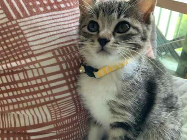 もとに戻った猫さん