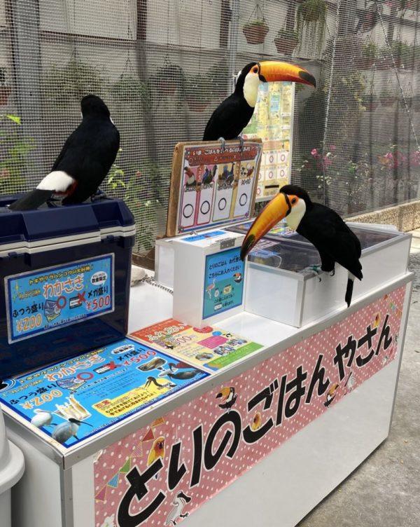 料金箱をくちばしで指している鳥