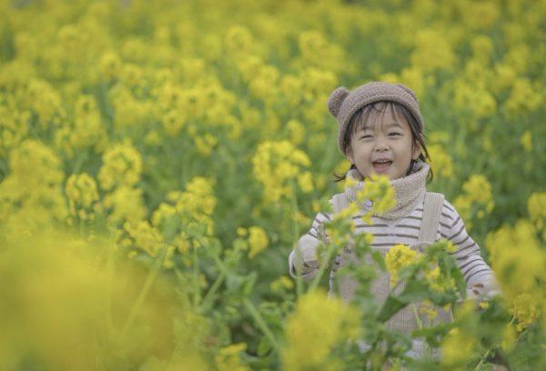 菜の花畑と男の子