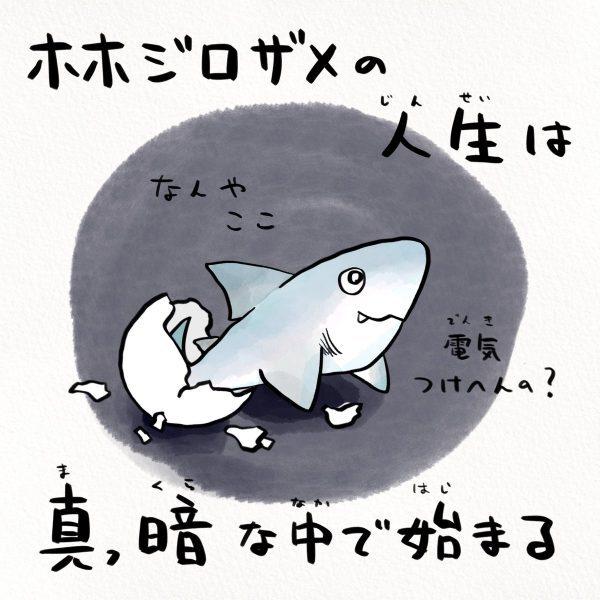 ホホジロザメの人生のスタート