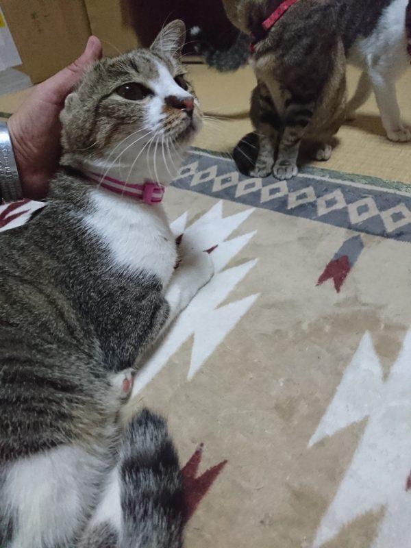 猫のはなびさん