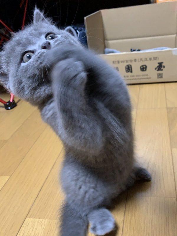 猫「ウソでしょ…」