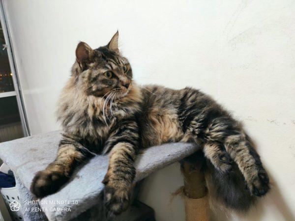 サマーカットされる前の猫