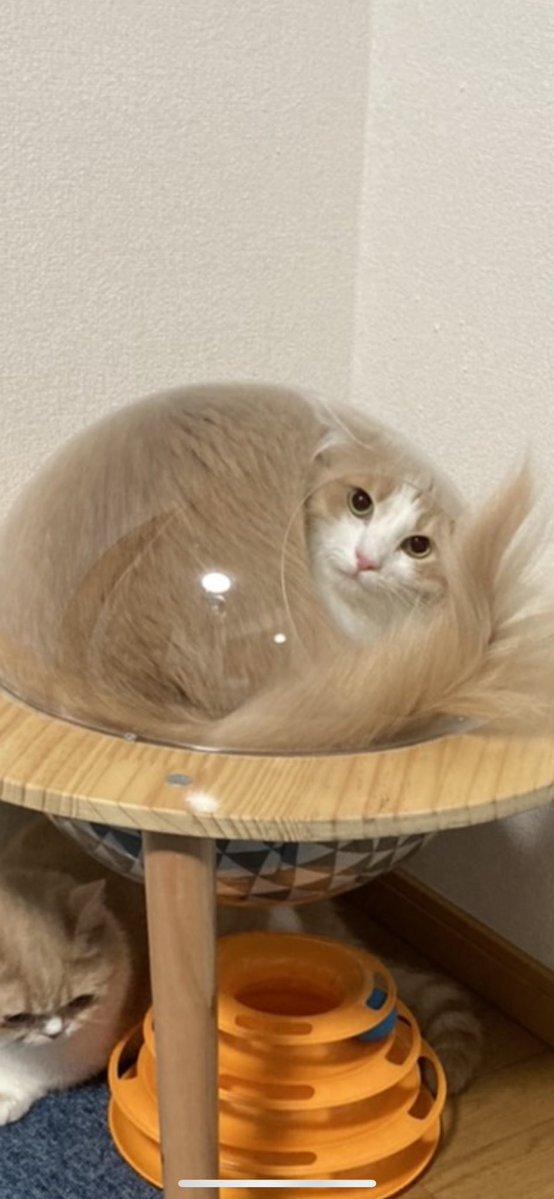 宇宙船に入った猫