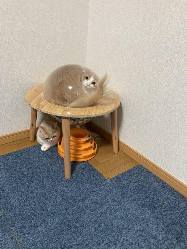 宇宙船ハウスに入った猫
