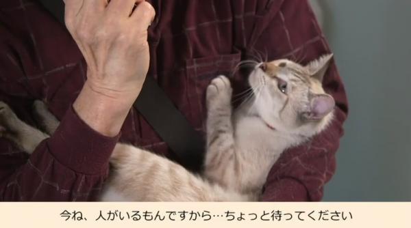 男性に抱かれてATMにやってきた猫