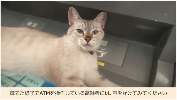 ATM操作画面の上でくつろぐ猫