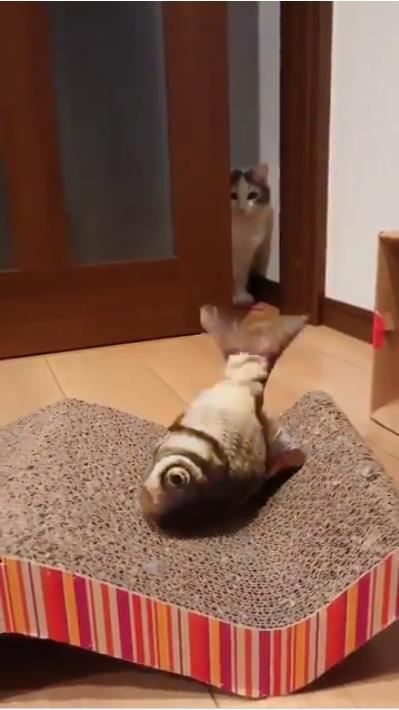 動く魚のおもちゃと猫