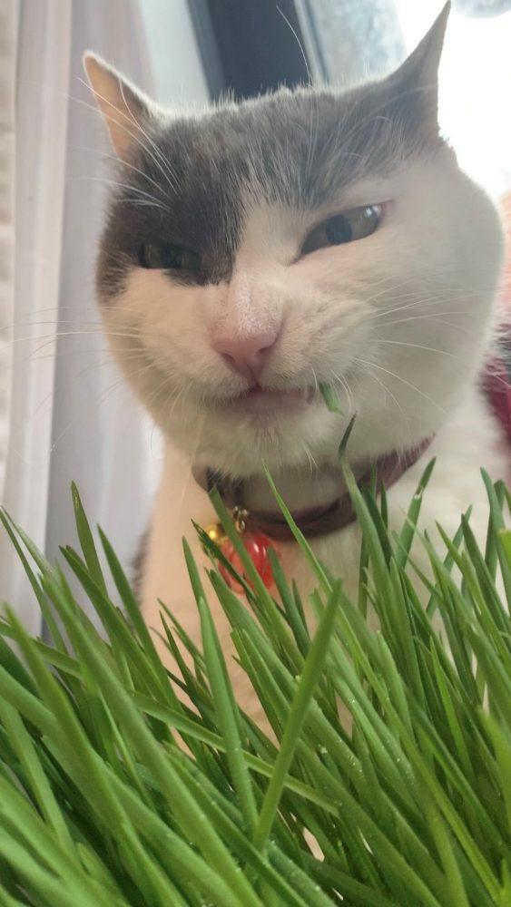 ドヤ顔する猫