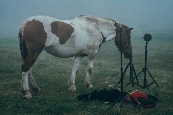 機材をなめる馬