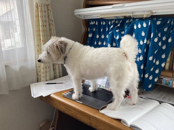 PCの上に立つ愛犬