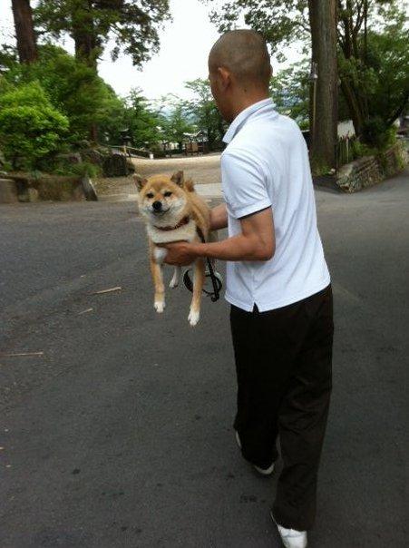 運ばれる柴犬