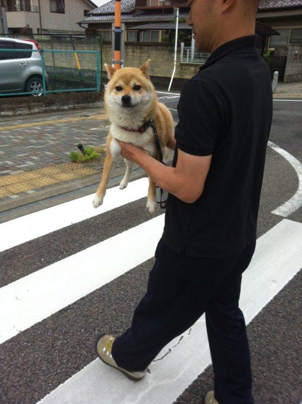 抱えられる柴犬
