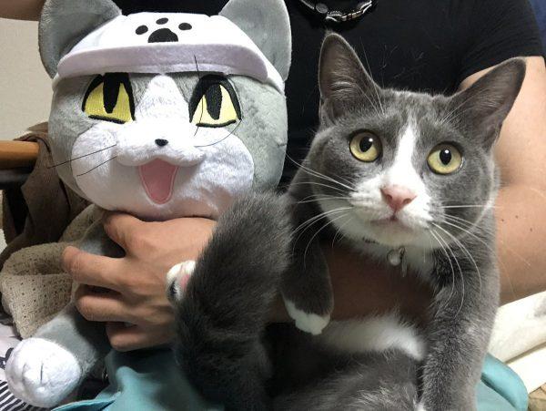 現場猫のぬいぐるみと猫