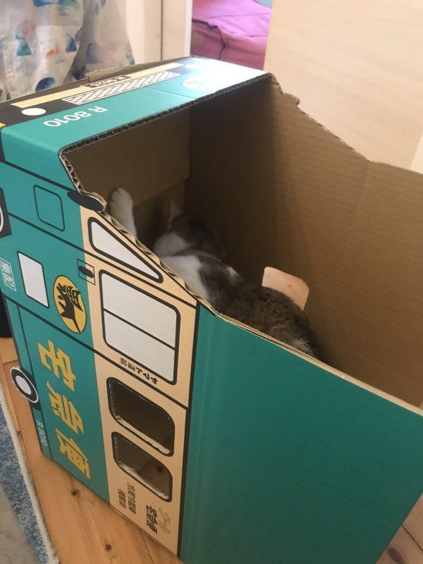 組み立て途中の段ボールの中に入った猫