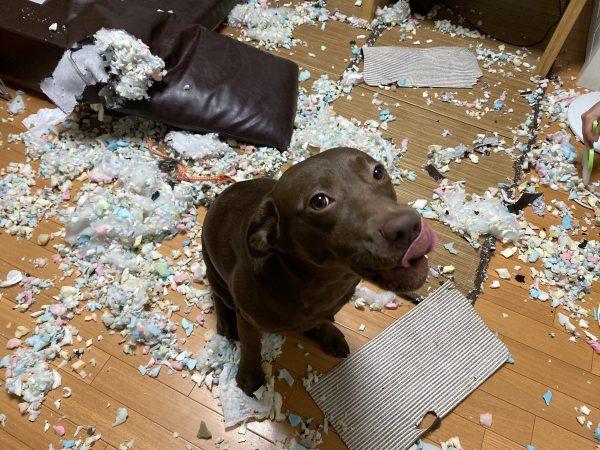 満足そうな顔の犬