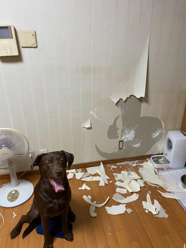 剥がれた壁紙の前に座る犬