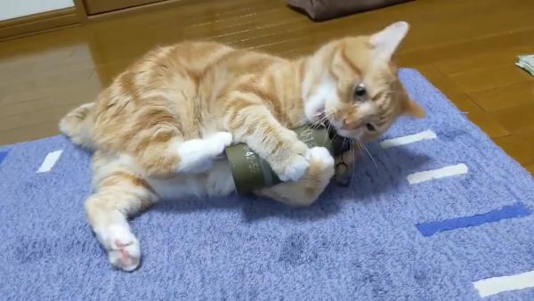 手りゅう弾のおもちゃで遊ぶ猫