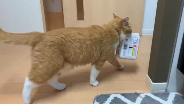 ペヤングを持ち去る猫