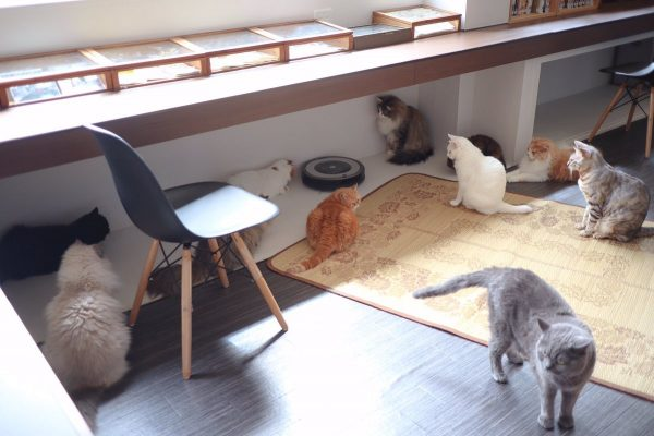 ルンバのまわりにたくさん猫が集まっている