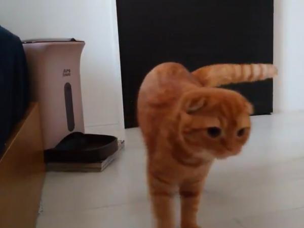 自動給餌器から少し離れようとする猫