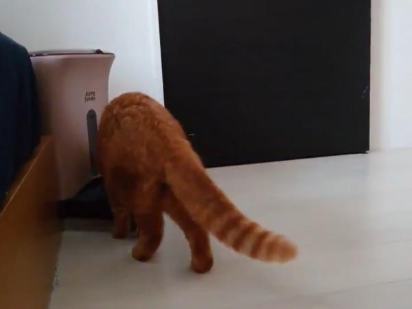 自動給餌器に駆け寄る猫