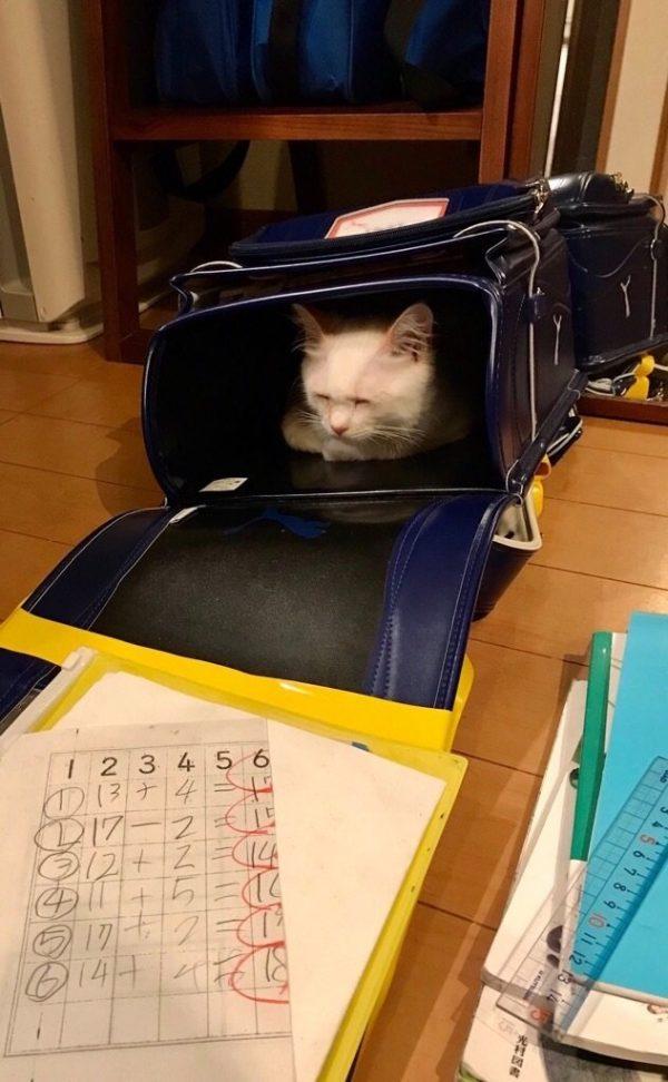 ランドセルの中に猫