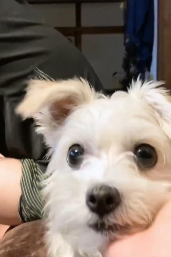 アゴを手のひらに乗せる犬