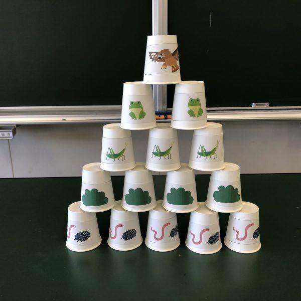 食物連鎖ピラミッドを表した紙コップ