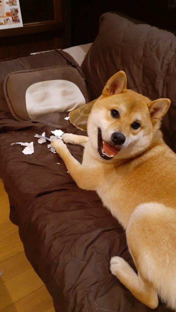 ビリビリになった紙と犬