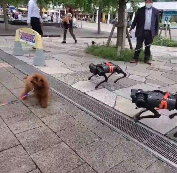 犬とロボット