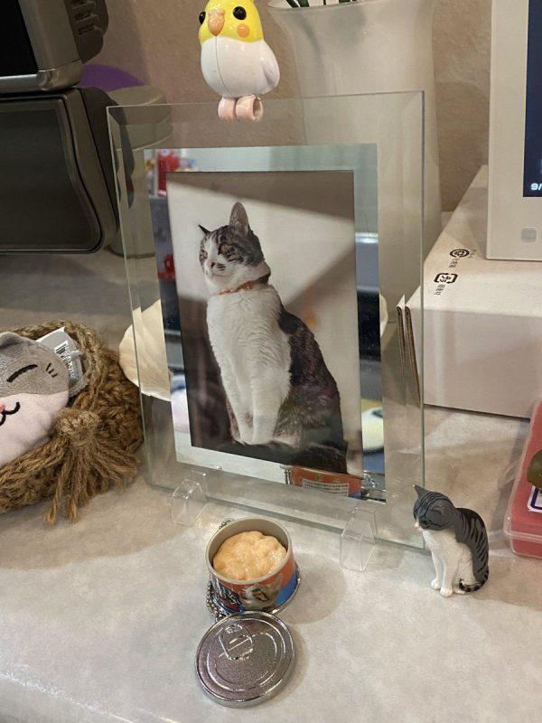 猫の写真とキャットフードのミニチュア