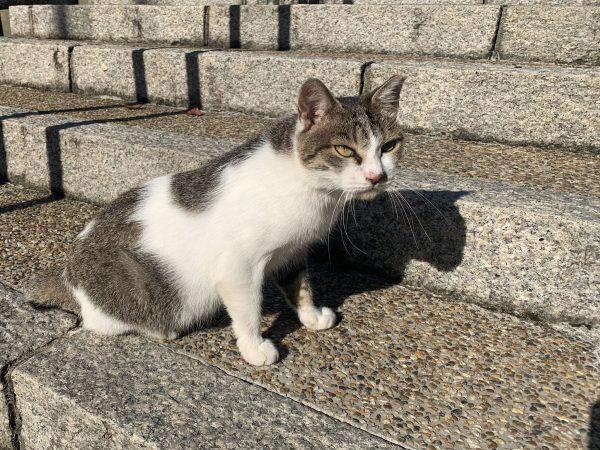 駅にやってくる猫(こんぶちゃん)