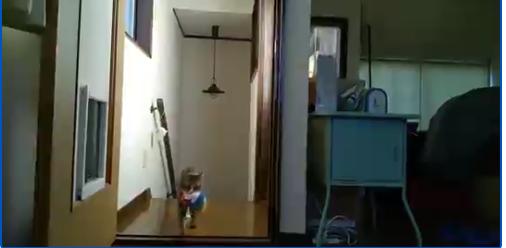 階段から上がってくる猫